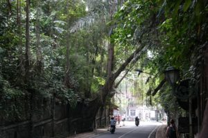 Ubud, Wzgórza Campuhan