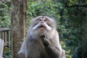 Ubud, Monkey Forest