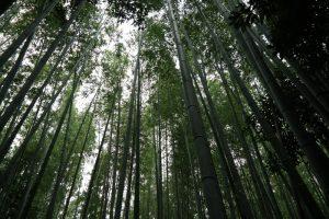 Kioto, las bambusowy